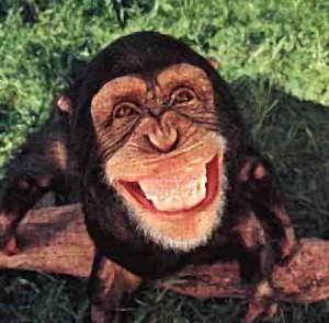"""Do Blog: Jabes costuma se definir como um """"animal"""" político. Será que Fábio está certo?"""