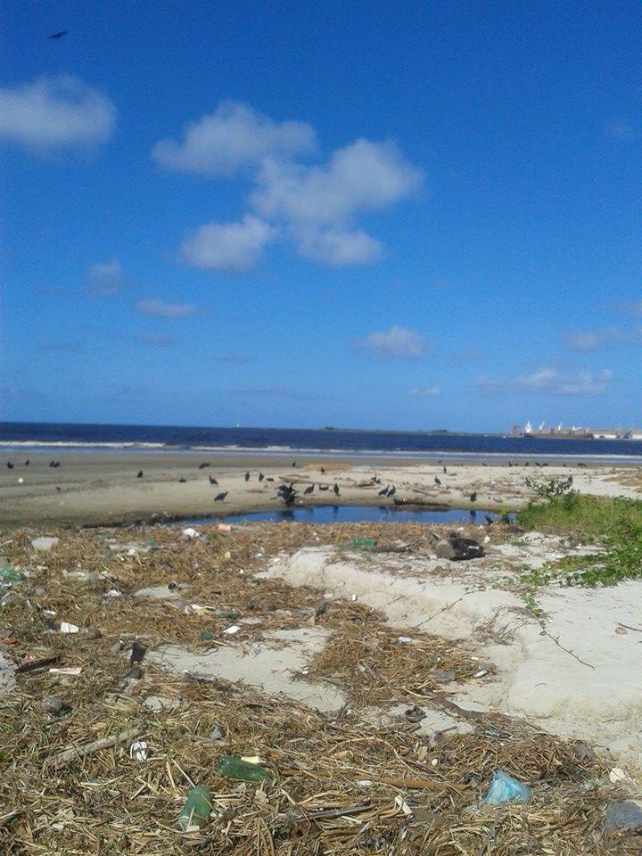 Esta é a praia da Avenida Litorânea Norte, em Ilhéus, que fica próxima ao Porto do Malhado. Os urubus tomaram conta do lugar. A imagem foi registrada ontem (12) pelo estudante Gabriel Almeida.
