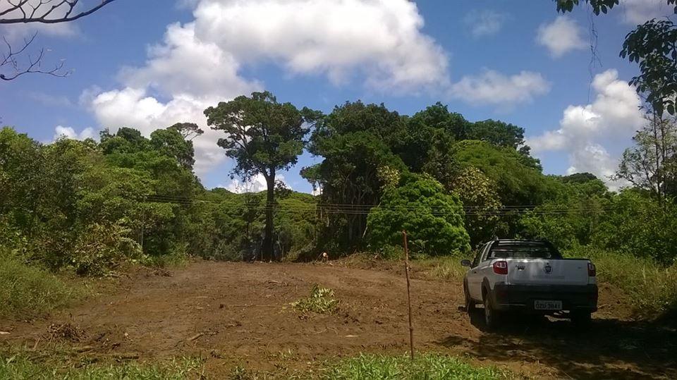 Desmatamento abre clareira em área da Mata Atlântica que estava em avançado estágio de regeneração.