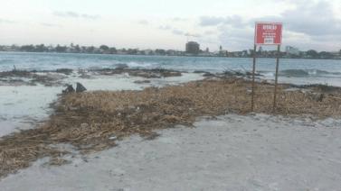 Baronesas estão na Praia do Cristo desde janeiro.