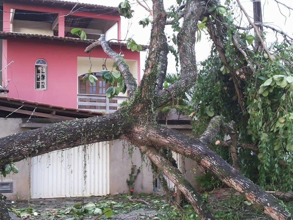 Árvore derrubada sobre passeio no bairro Jardim Savóia.