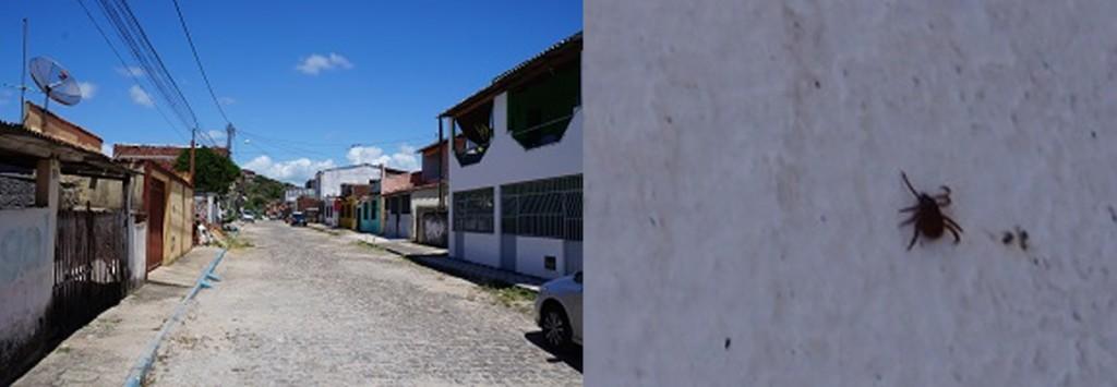 Infestação de carrpatos na Rua Hortência.