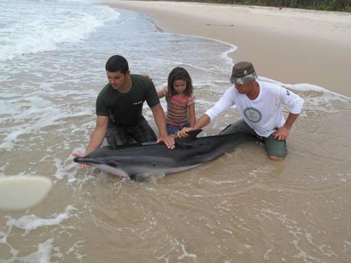 Esforço de biólogos, veterinários e de moradopessoas das comunidades de Picaranga e da Praia do Patizeiro