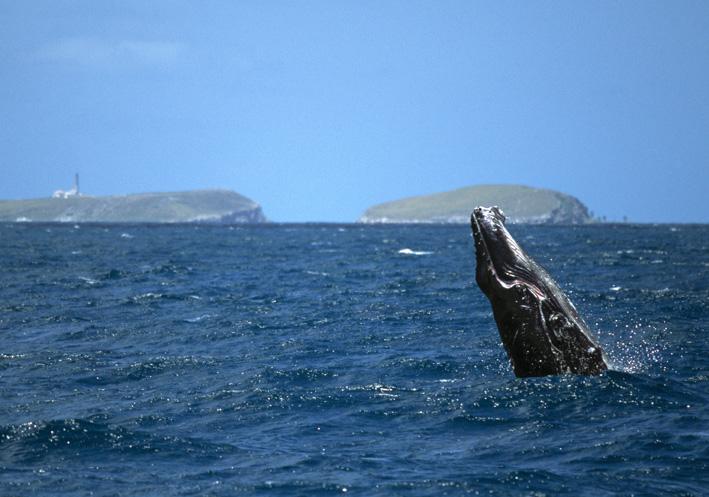 Baleia jubarte em Abrolhos. Imagem: UOL Viagem.