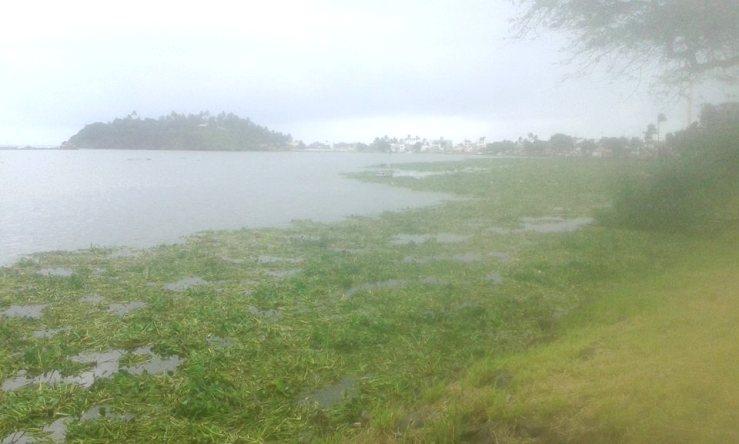 Plantas aquáticas são indicadores de poluição. Imagem: Thiago Dias/Blog do Gusmão.