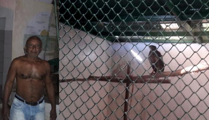 Carlos Alberto e o gavião que ele salvou. Imagens: Secom-Ilhéus.