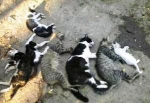 Extermínio de gatos em Una. IMAGEM: UNA NEWS