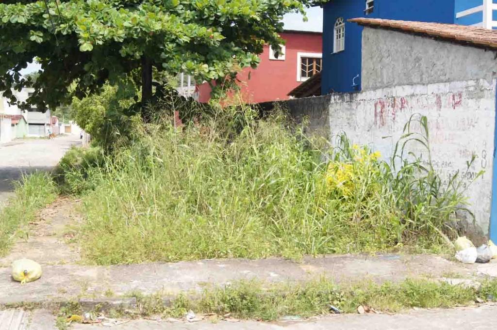 Esta é uma das imagens do canal. Note que o mato vai superar o tamanho do muro.